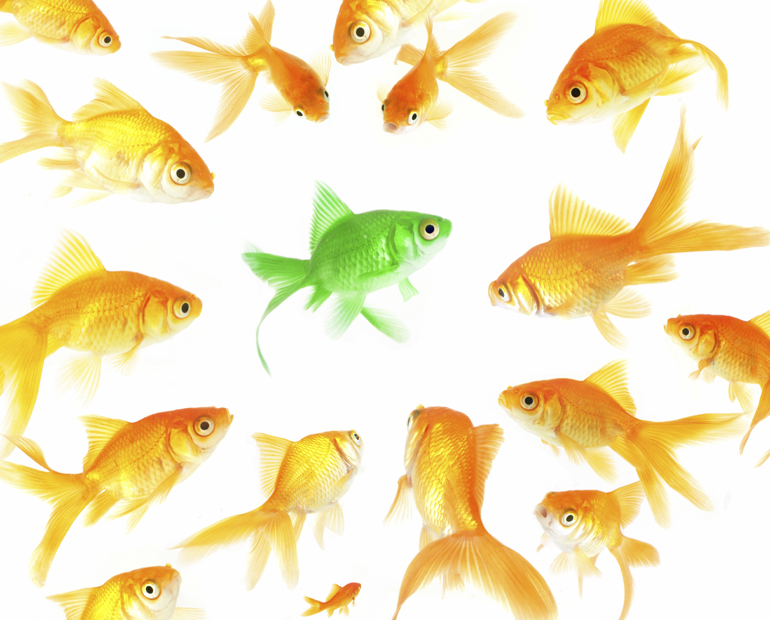 yourself the importance of specialization marketing yourself the importance of specialization